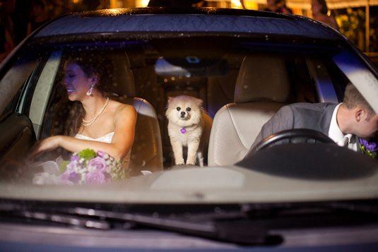 castle-ladyhawke-wedding-48